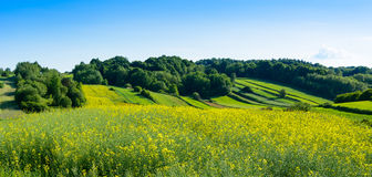 Beauty green hills in Poland. Green rolling hills and field in Roztocze region, Poland royalty free stock photos