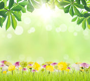 Beauty green leaf and flower on grass spring season Stock Image