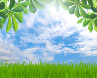 Beauty green leaf and grass spring season Stock Photo
