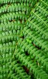 Beauty green leaf. Plant leaf in thw forest Stock Image