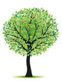 Beauty green tree Stock Photo