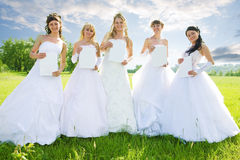 Beauty group of bride Royalty Free Stock Image