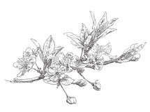 Beauty hand drawn flowers Stock Photography