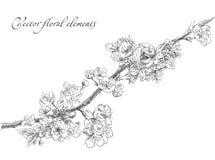 Beauty hand drawn flowers Royalty Free Stock Photo
