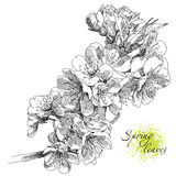 Beauty hand drawn flowers. Beauty hand drawn illustration with flowers. Vector Royalty Free Stock Image