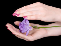 Beauty is in the hands Royalty Free Stock Photo