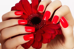 Beauty hands with red fashion manicure and bright flower. Beautiful manicured red polish on nails. Fasionable cosmatics and makeup royalty free stock image