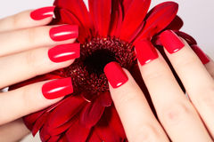 Beauty hands with red fashion manicure and bright flower. Beautiful manicured red polish on nails. Fasionable cosmatics and makeup stock photos