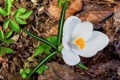 Beauty hidden in a flower stock photography