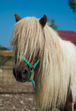Beauty horse. Portrait of a beautiful horse Stock Images