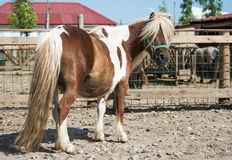 Beauty horse. Portrait of a beautiful horse Royalty Free Stock Photography