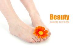 Beauty image Stock Photography