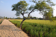 Beauty of Indian village. Stock Photo