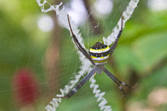 Beauty insect on web in forest Stock Photo