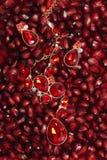 Beauty jewelry on pomegranate. Red precious stones Royalty Free Stock Photos
