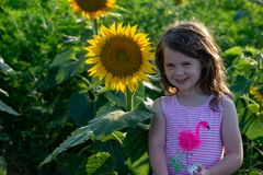 Beauty joyful young girl with sunflower enjoying nature and laughing on summer sunflower field. Sunflare, sunbeams, glow royalty free stock photos