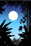 Beauty jungle silhouette Stock Image
