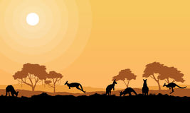 Beauty kangaroo on park scenery silhouettes Stock Photo