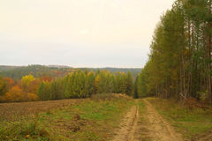 Beauty landscape autumn forest view Stock Photography