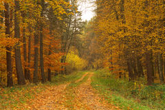 Beauty landscape autumn forest view Royalty Free Stock Photography