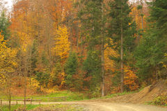 Beauty landscape autumn forest view Royalty Free Stock Images