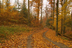 Beauty landscape autumn forest view Stock Images