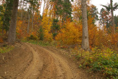 Beauty landscape autumn forest view Stock Photos