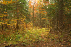 Beauty landscape autumn forest view Stock Photo