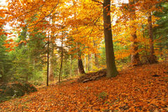 Beauty landscape autumn forest view Stock Image