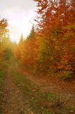 Beauty landscape autumn forest view Royalty Free Stock Image
