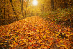 Beauty landscape autumn forest view Royalty Free Stock Photo