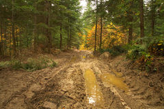 Beauty landscape autumn forest view with muddy road Stock Photo