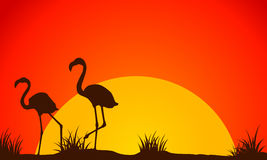 Beauty landscape flamingo at sunset silhouette Stock Photos