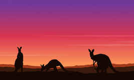 Beauty landscape kangaroo silhouette collection Royalty Free Stock Photography