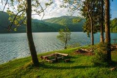 Beauty landscape shore pine trees to mountain lake Stock Image