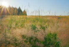 Beauty landscape. Summer landscape beauty meadow at dawn Royalty Free Stock Photos