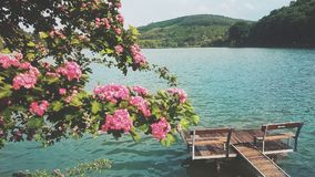 Beauty landscape. Tree with pink flowes and lake Royalty Free Stock Photos