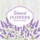 Beauty lavander label design. Beauty lavander label design with border over wooden frame. Botanical flowers text  over white background. Lavender garland Stock Image