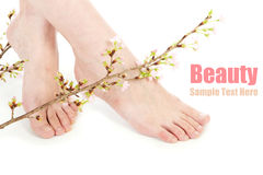 Beauty legs and flower Stock Images