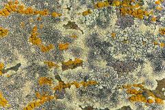 The beauty of lichens Stock Image
