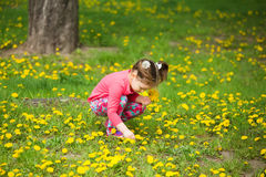 Beauty little girl with yellow dandelions playing outside on spr Stock Images
