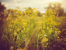 Beauty meadow. Royalty Free Stock Images