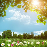 Beauty meadow with daisy flowers Stock Images