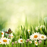 Beauty meadow with flowers and green grass Stock Image