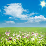 Beauty meadow with flowers Royalty Free Stock Photo