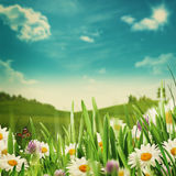 Beauty meadow with flowers and green grass Stock Photo