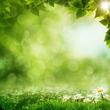 Beauty morning in the green forest Stock Images