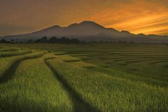 The beauty of the morning in the rice fields. Warm morning sun with morning beauty in the rice fields stock images