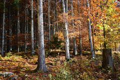 The beauty of mother earth in autumn. Autumn forests have magical colors, like in fairy tales Royalty Free Stock Photo