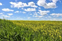Farmers` newly planted field royalty free stock photography